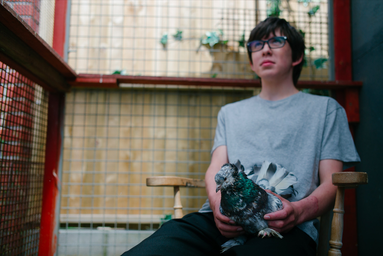 Ferris and the Fancy Pigeon